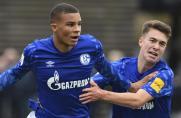U19-Derby: Die Bilanz beim BVB spricht für Schalke