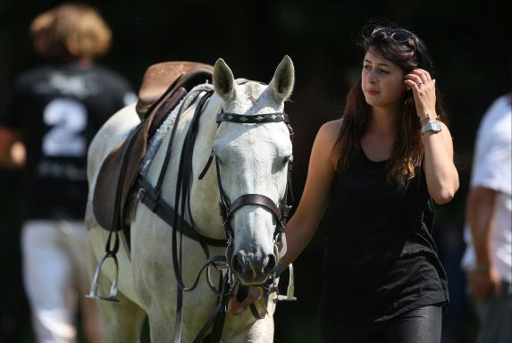 Pferd, Pferd
